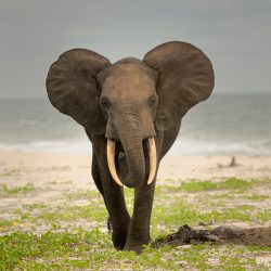 Gabon-africas-eden