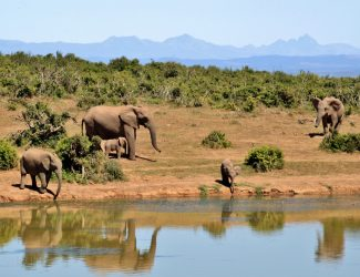 elephant-herd-of-elephants-animals-african-bush-elephant