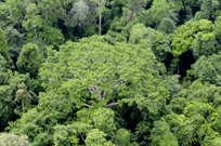 rainforest Gabon