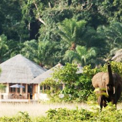 AE_Rombout - Loango Lodge with elephant copy